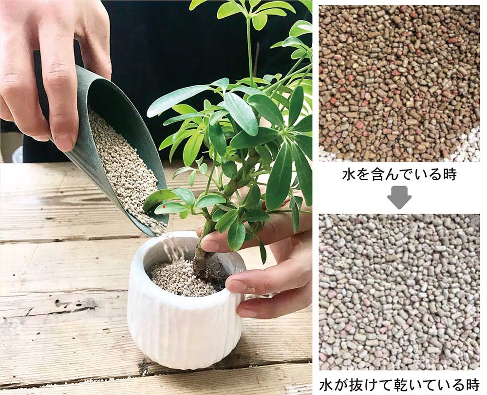 観葉植物専門店「cotoha」オリジナル用土