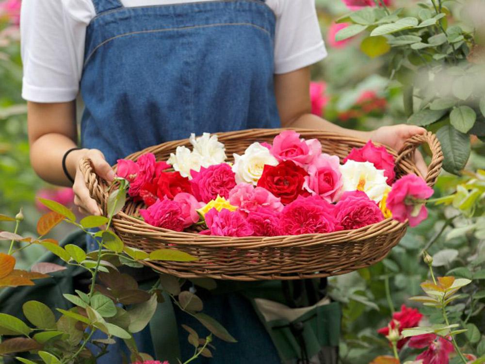 ローズラボが選んだバラたち