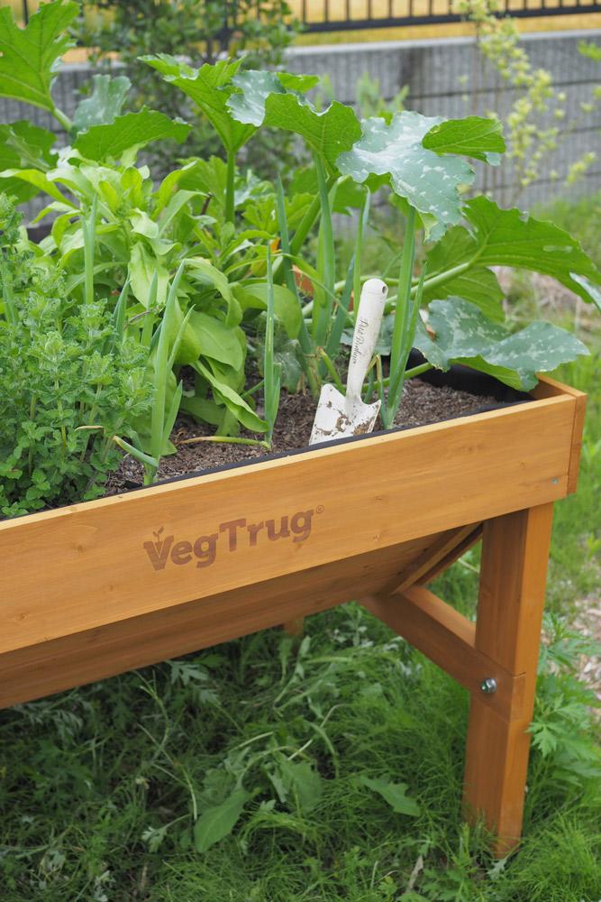 ベジトラグ栽培、1か月目の感想は?