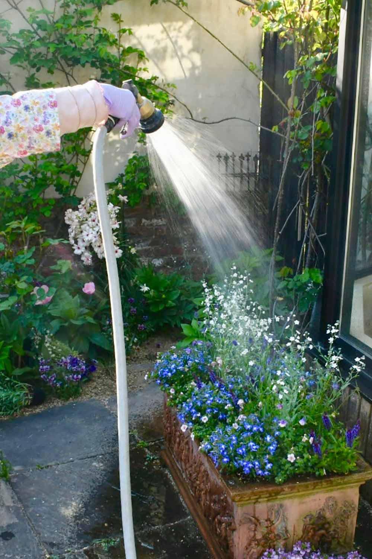 植え付け後の水やり