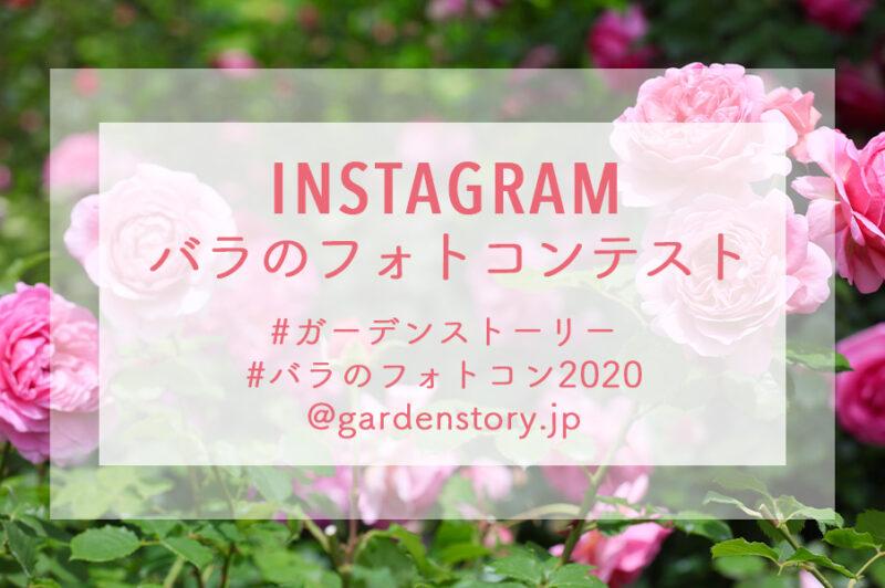 ガーデンストーリー【Instagram バラのフォトコンテスト2020】開催!