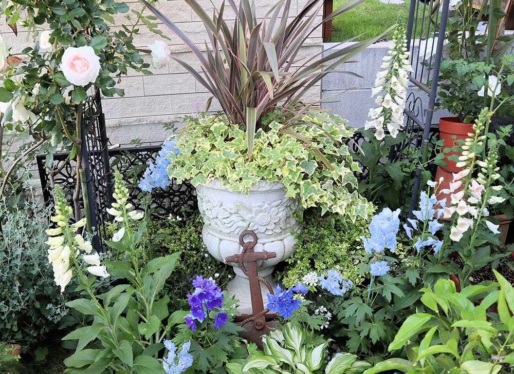 ニューサイランの鉢植え
