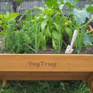 ベジトラグでガーデニングをはじめよう! Vol.3 〜植えた野菜とハーブの管理編