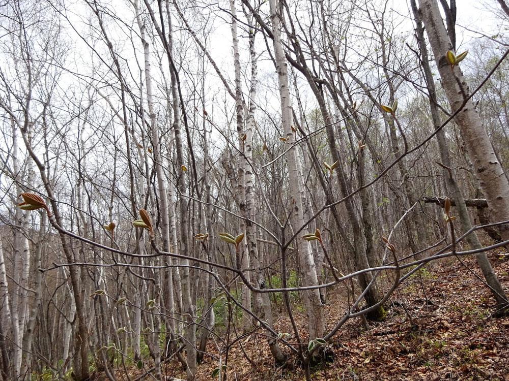 スラッと伸びた樹、ずっしりと構えた樹