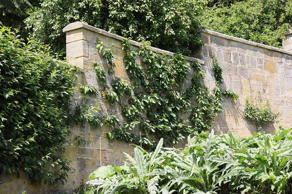 グレイブタイ・マナーの石塀