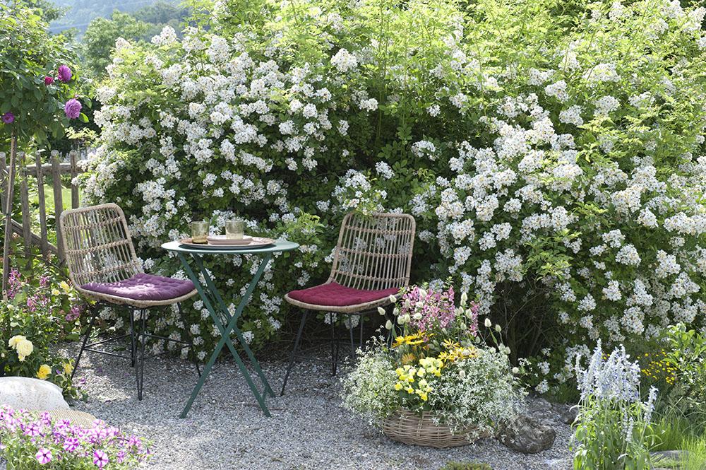 バラの咲く庭
