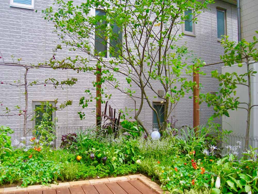 デッキ一体型菜園