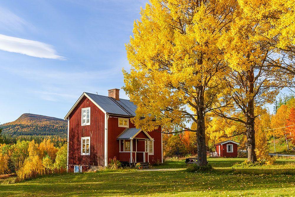 落葉樹のシンボルツリー