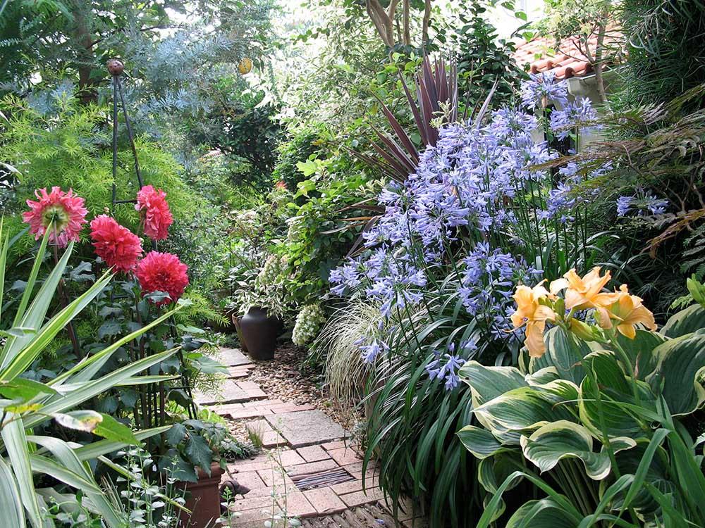 アガパンサスやヘメロカリス、ギボウシなどが育つ梅雨の庭
