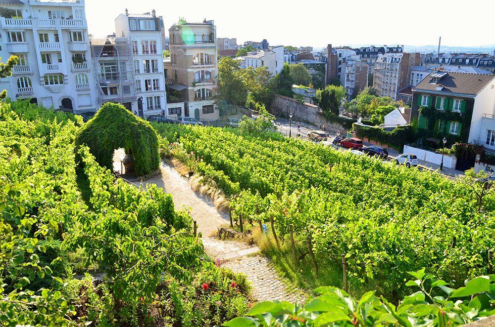 パリのブドウ畑