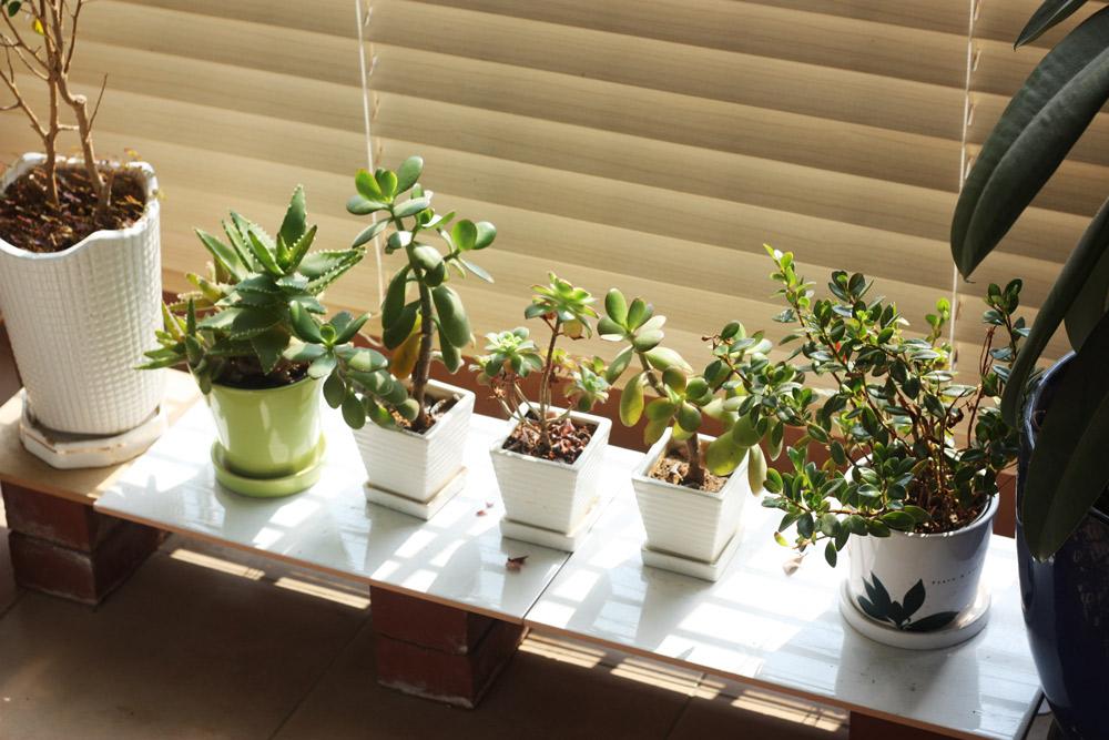 レンガを脚にして板を渡しただけの簡易植物棚でも十分機能する。siso_seasaw/Shutterstock.com