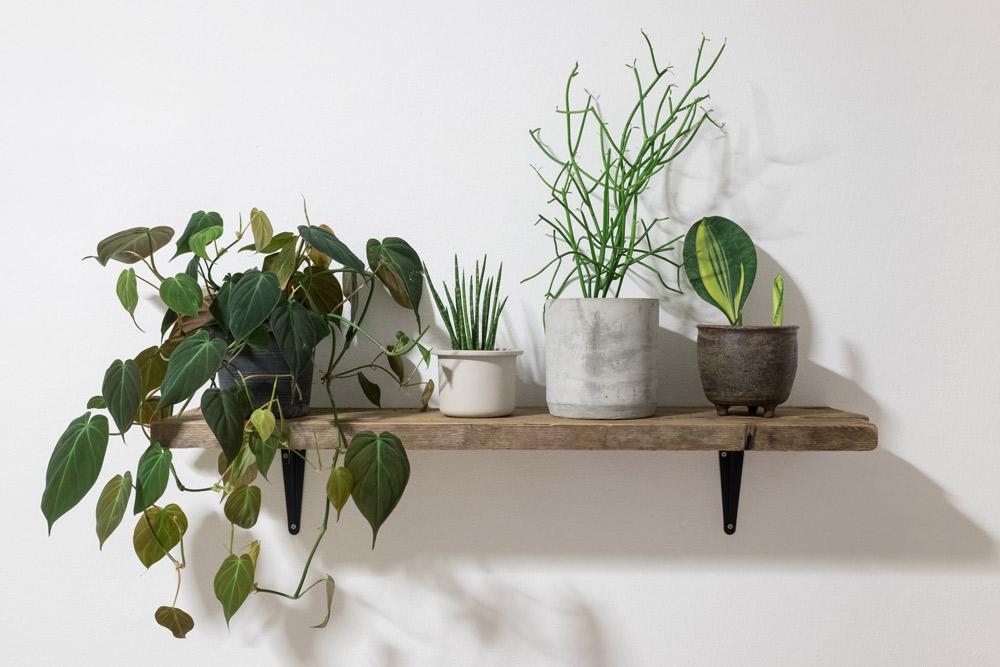 植物は人形や小物と一緒に並べる