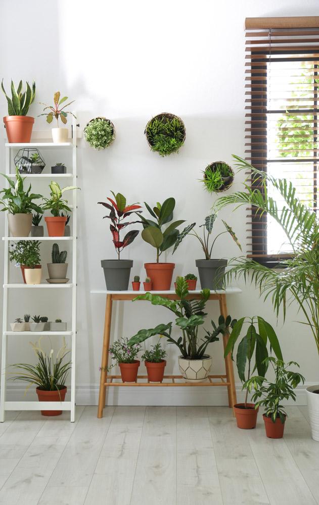 壁際に2つのデザインの植物の棚を組み合わせて。New Africa/Shutterstock.com