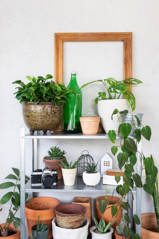 賢い植物棚の選び方