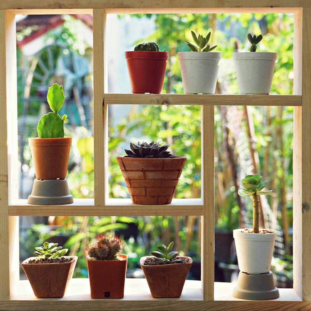 板を組み合わせただけの簡単な棚に、多肉植物の小鉢を集めて。Sundaemorning/Shutterstock.com