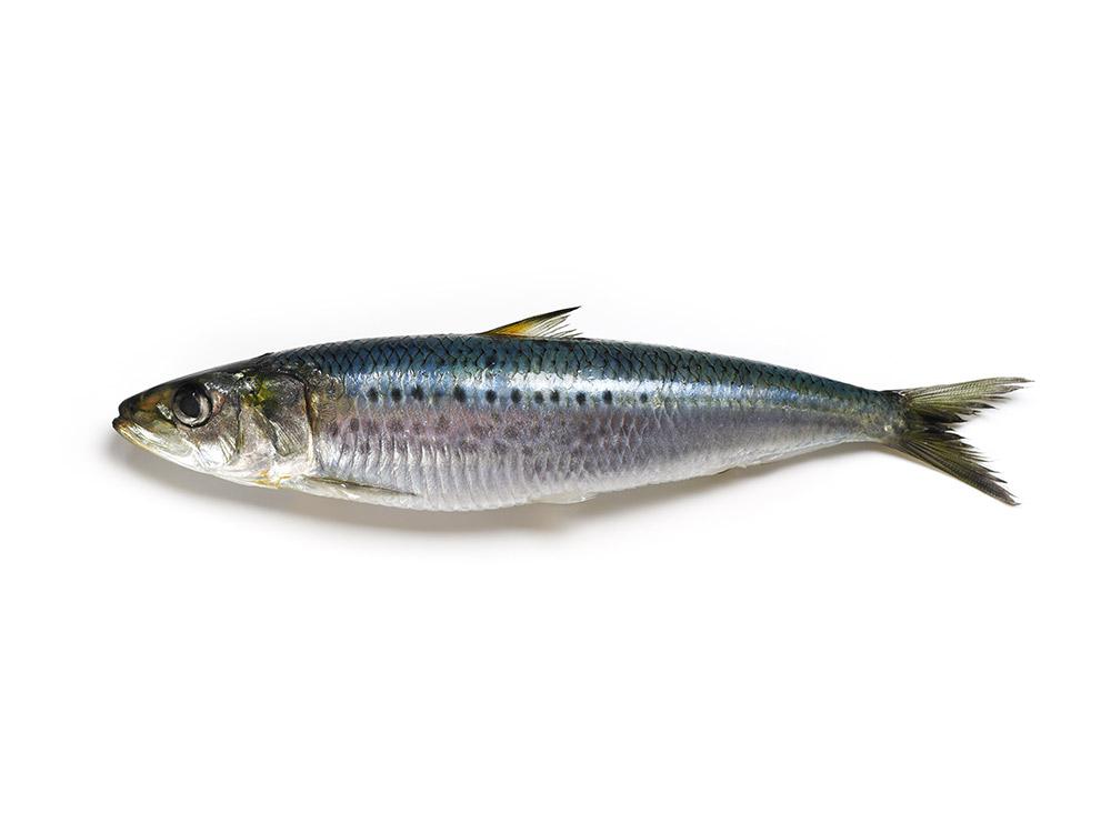 魚粉(ぎょふん)