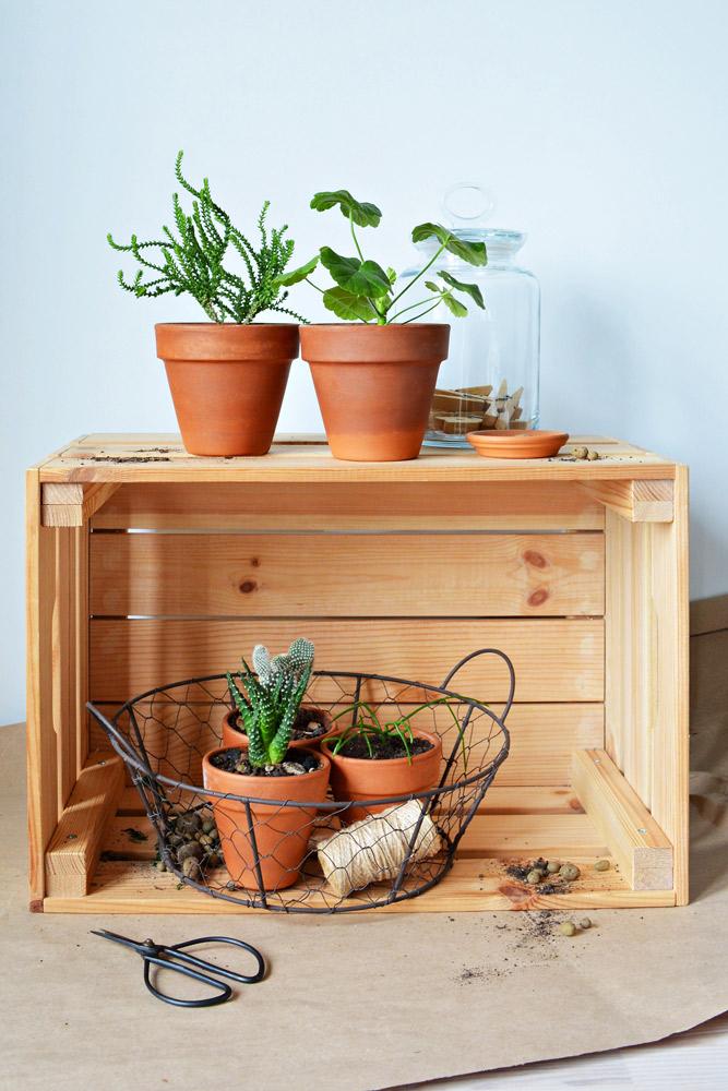 木箱を横に倒しただけの植物の棚。Maryana Volkova/Shutterstock.com