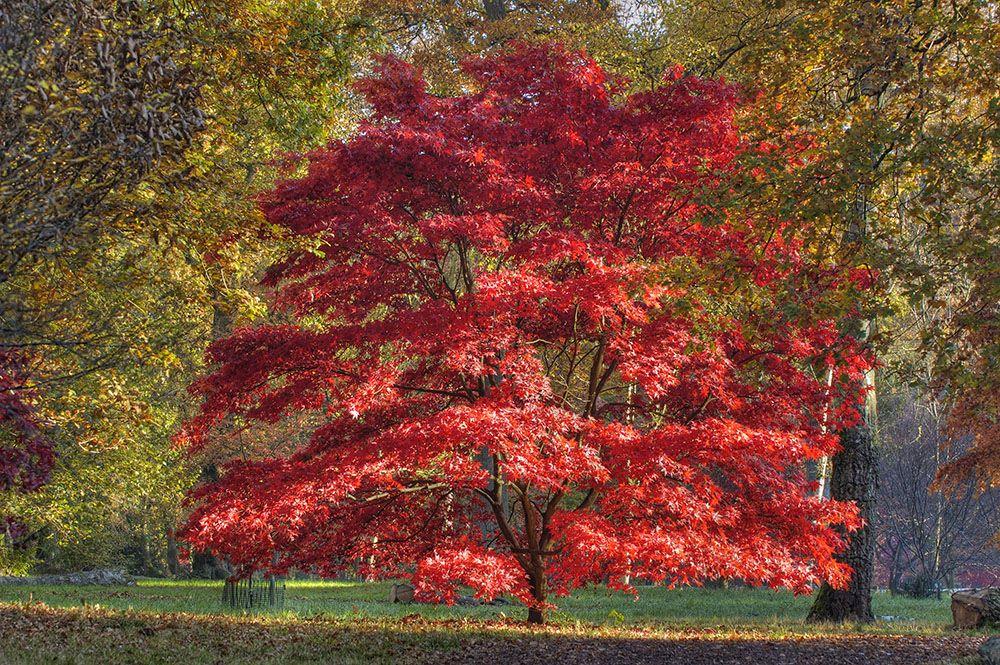 高木の落葉樹