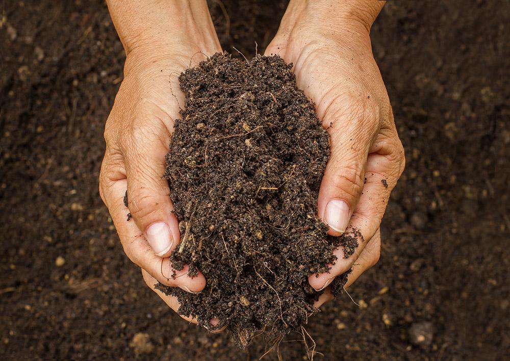 サルスベリの土作り