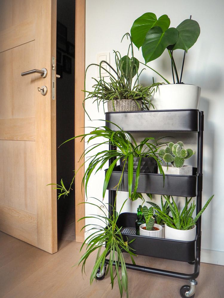 キッチンなどで使うスチールワゴンを植物棚に利用した例。Luoxi/Shutterstock.com