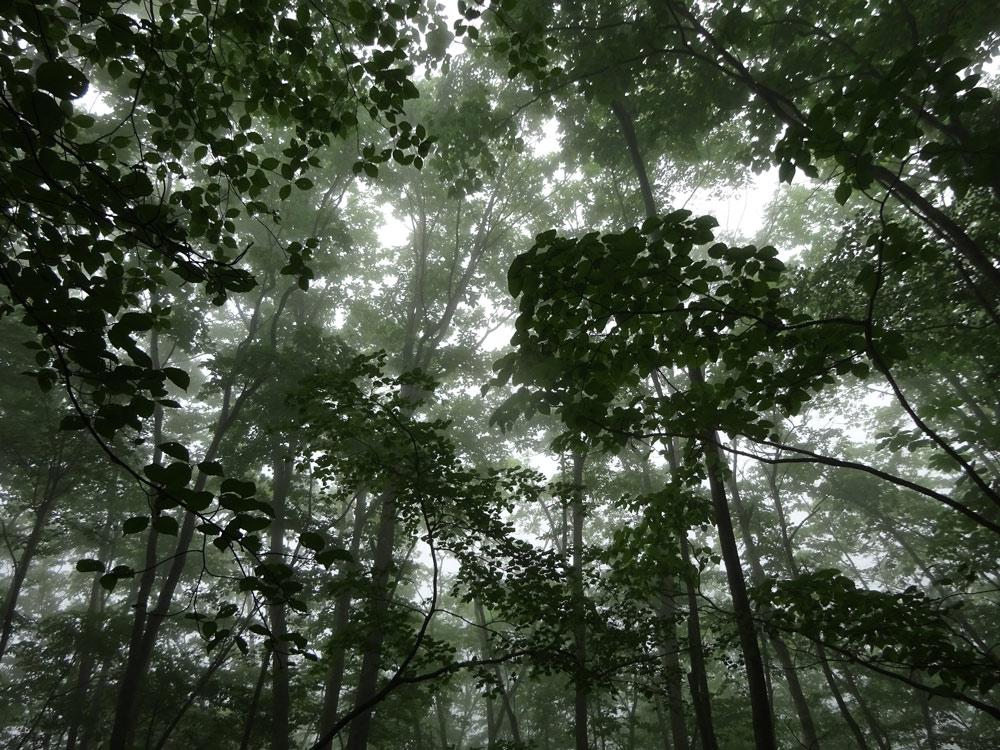 「森と人をつなぐ」自然学校〜高原便り 四季折々Vol.5〜