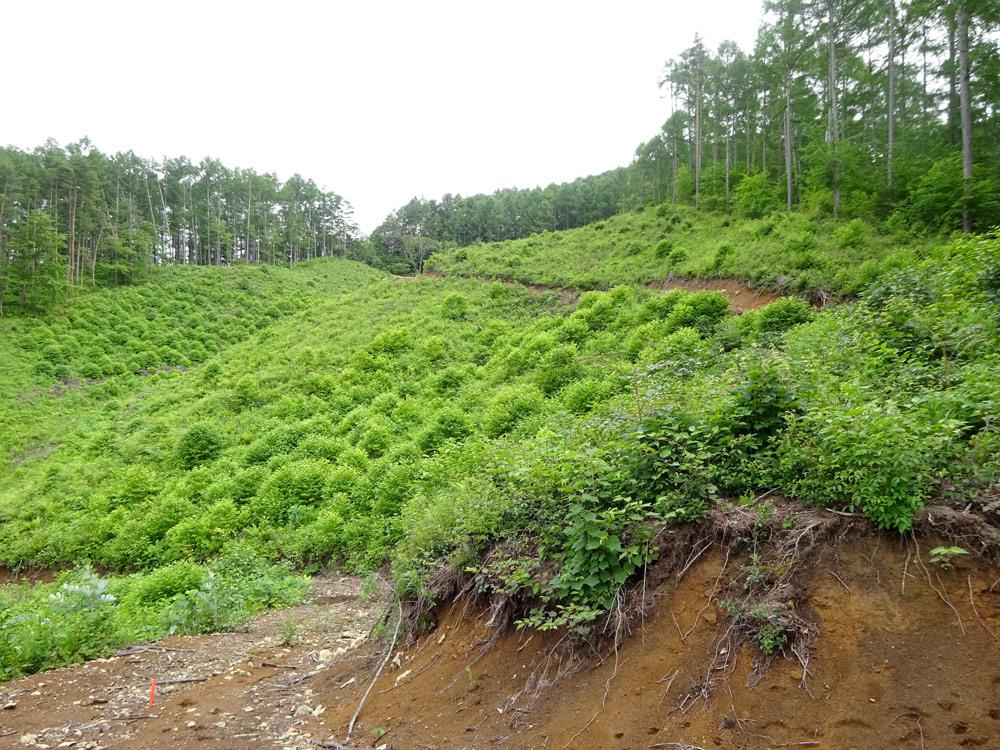 整備(皆伐)された森 どんな森になっていくのでしょう