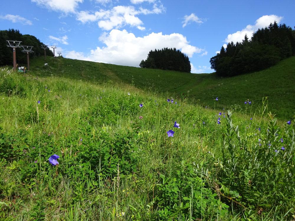 スキー場として維持されている草原