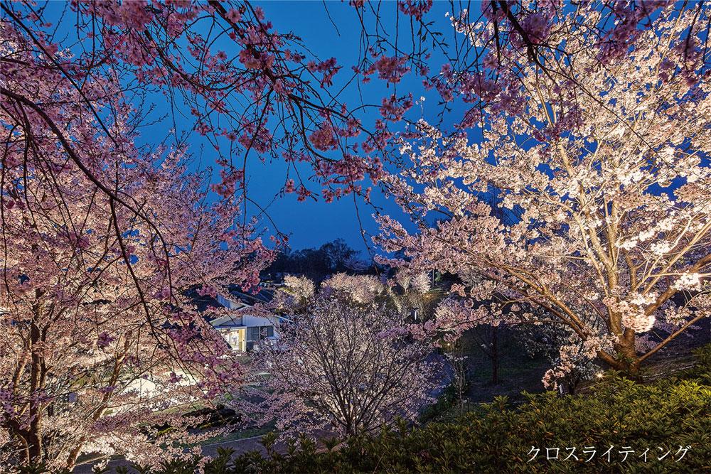桜にオススメのライトアップ