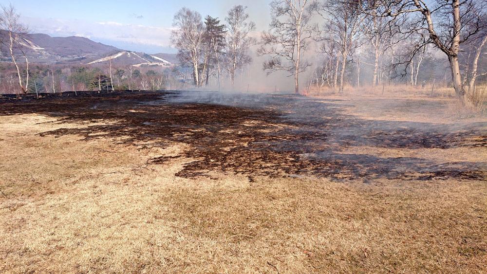 草原維持のための火入れ作業と先駆種シラカバ