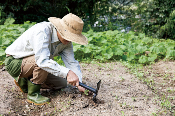雑草をとる