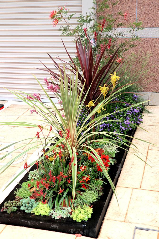 小さな庭の植栽