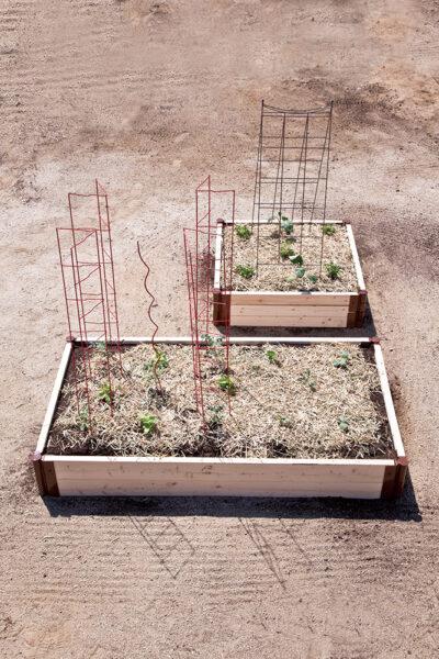 レイズドベッドへの植えつけ5