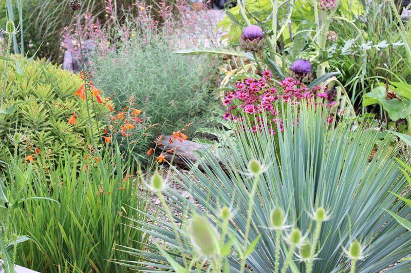夏のガーデンの宿根草