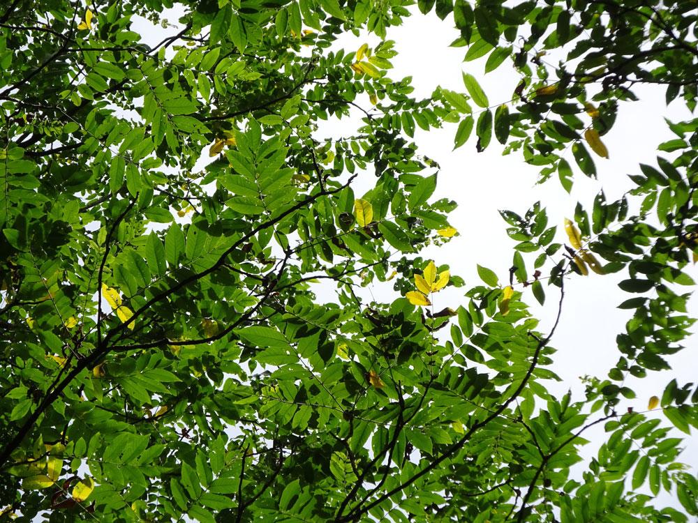色づき始めた葉