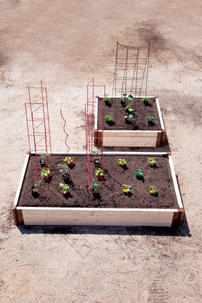 レイズドベッドへの植えつけ3