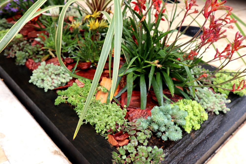 小さな花壇の植栽