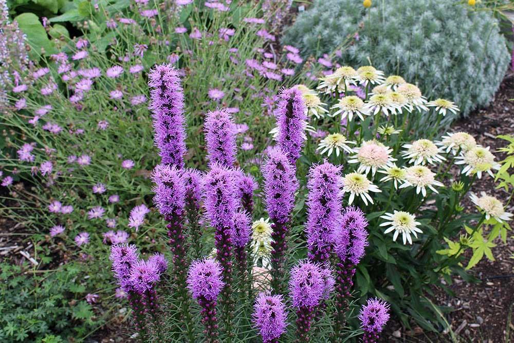 夏の庭の花