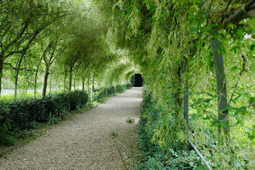 マルバリーズ・ガーデンズのキングサリのトンネル