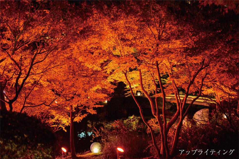 紅葉にオススメのライトアップ