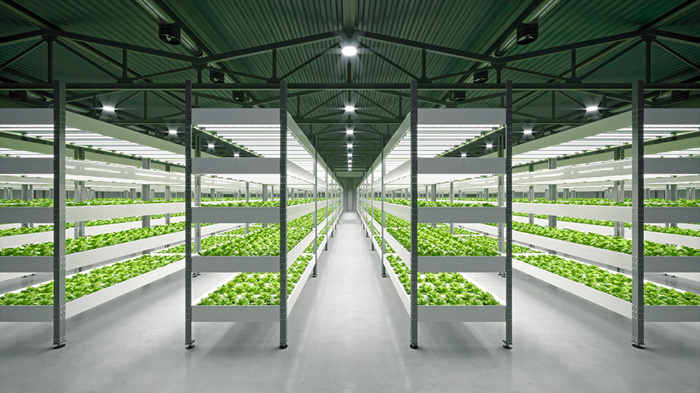 水耕栽培のメリット