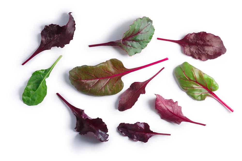水耕栽培に向く野菜