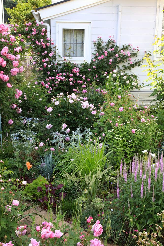 バラと宿根草の窓辺
