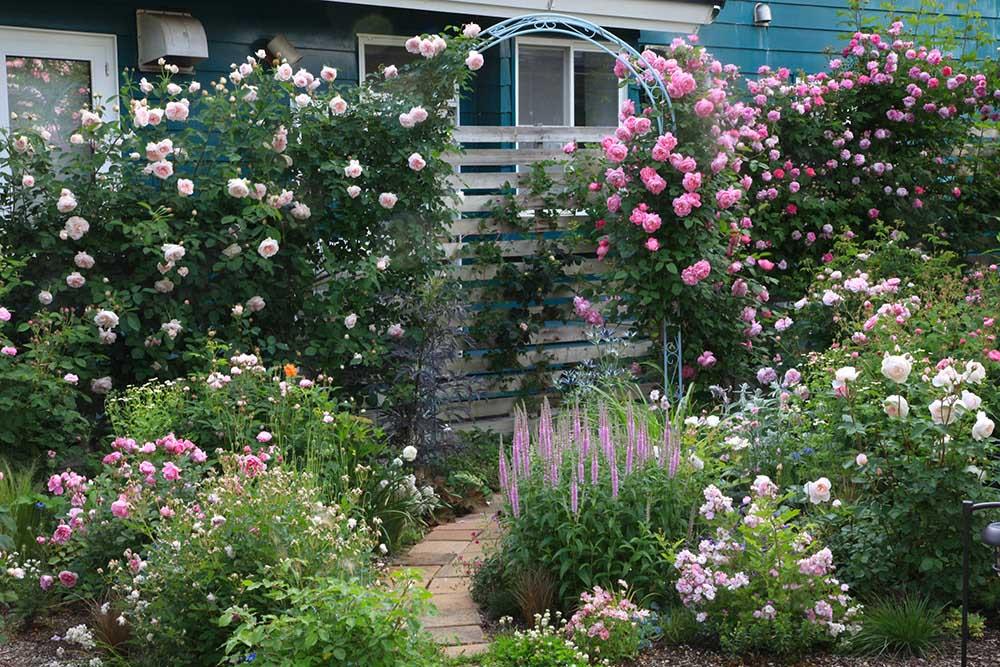 バラの小道とアーチ