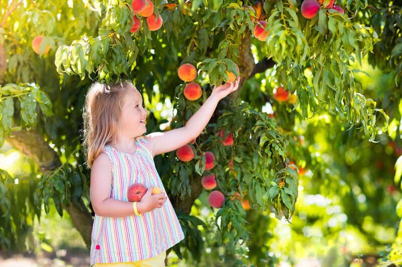 ガーデンの果樹