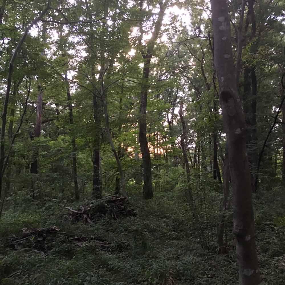 初秋の武蔵野の森