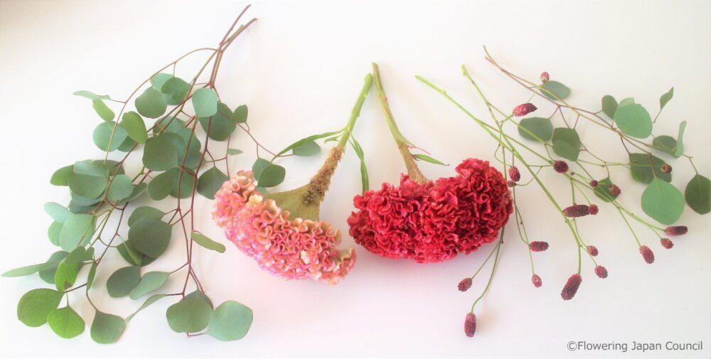 ケイトウのアレンジ花材