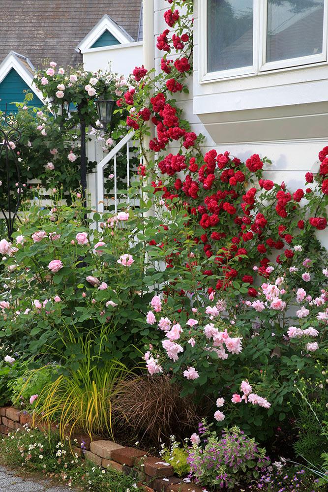 バラの咲く窓辺