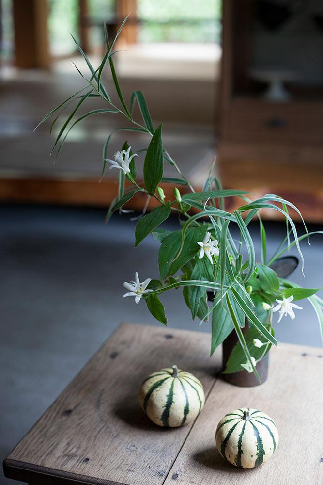 ホトトギスの切り花