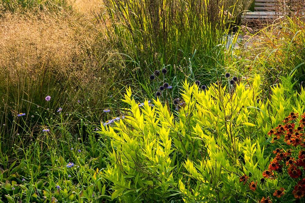 秋の宿根草