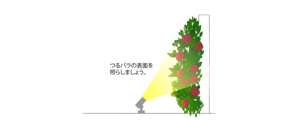つるバラの表面を照らす
